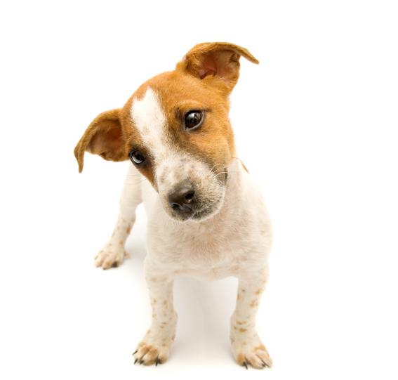 listeningdog.jpg